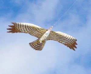 Greifvogelattrappe
